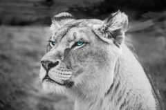 Die Löwin in Dir will endlich raus
